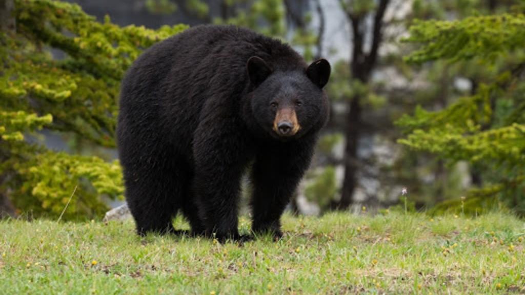 oso-paseo-campo-susto