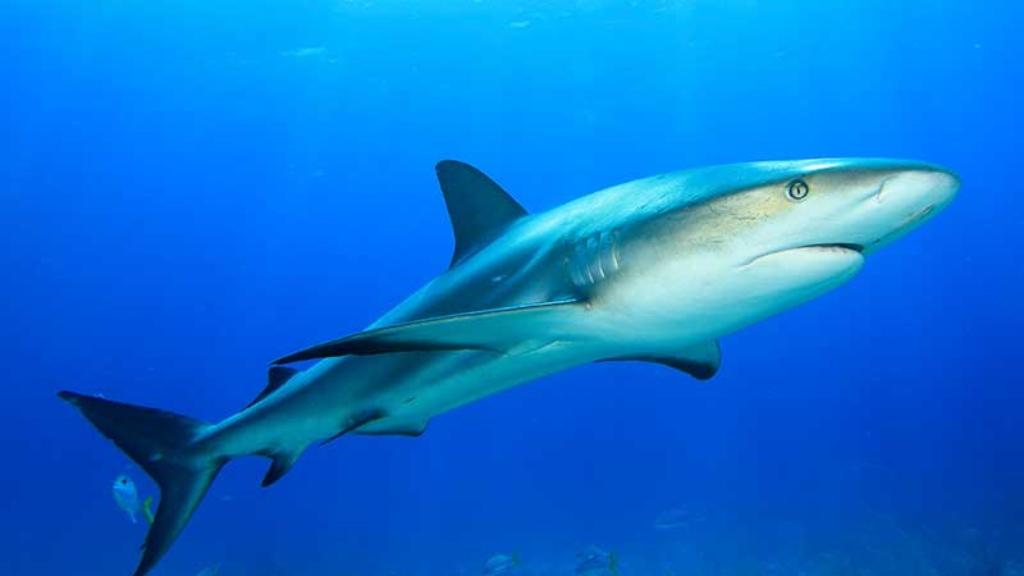 tiburon-niño-ataque-australia