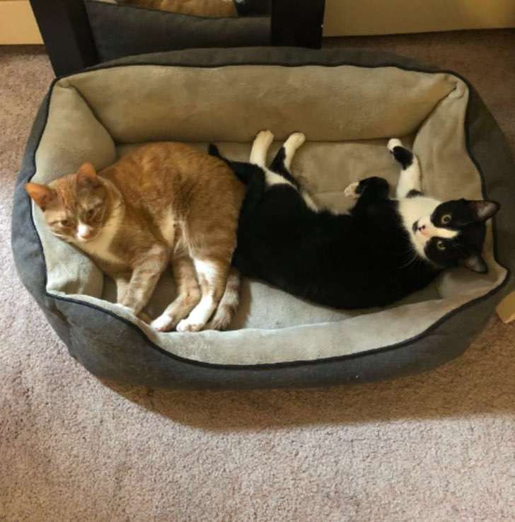 gatos-felinos-amistad