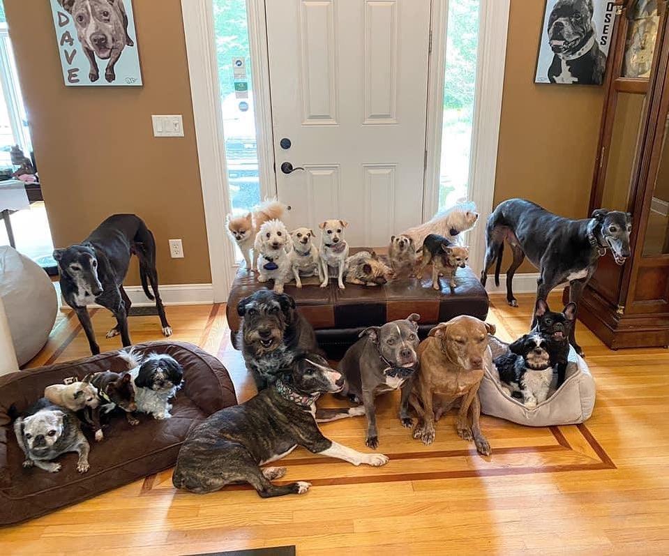 perros-adoptados-pareja