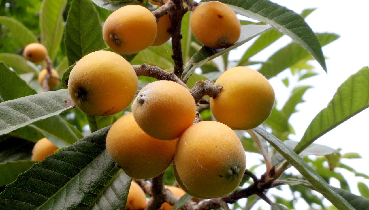 nisperos-fruta-beneficio