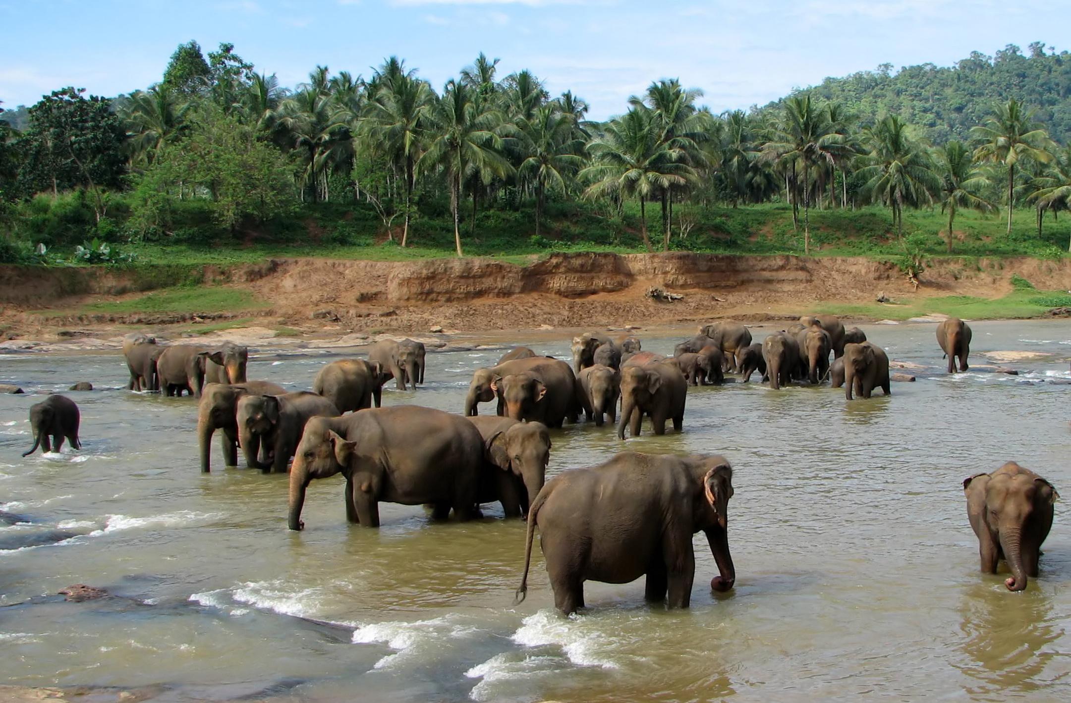 ali-elefante-amigos
