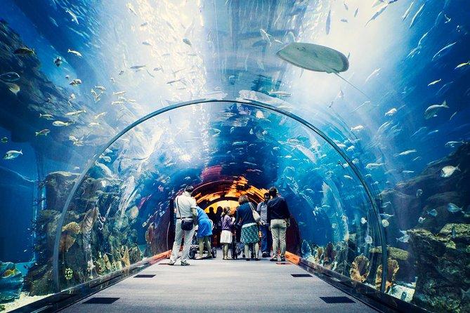 Acuario del Dubai Mall- Cortesía