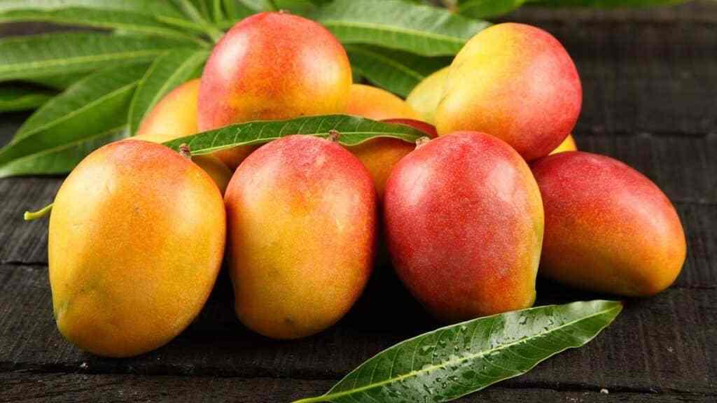 Mangos - Cortesía Internet
